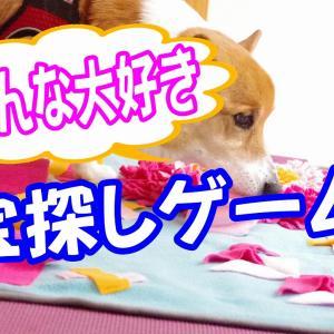 【自粛・雨の日にも最適】愛犬と室内で出来るストレス発散には宝探し遊び!