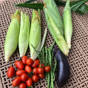 家庭菜園 収穫