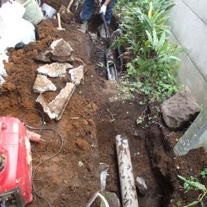 トイレの詰まり気味は外部の汚水桝の底が木の根で壊されていました