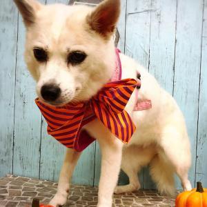♡かぼちゃ♡