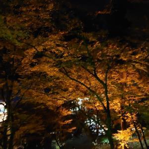 香嵐渓のライトアップへ