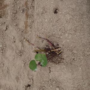 愛知牧場で芋掘り(^_-)&エサやり
