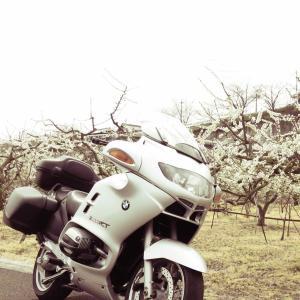 いざ、下北山スポーツ公園の桜に逢いに!