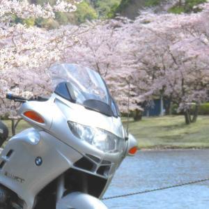 2020年の桜 〜ふつうでない春を記憶に焼き付けて〜