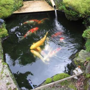 池作り、ついに見切ったか?! 〜ナイアガラ洗浄の効果〜