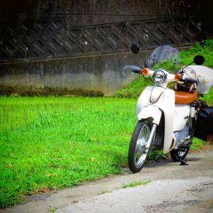 雨の谷間に、白かぶ小旅行
