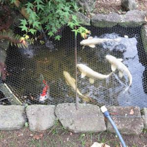 第2池のこれからを考える 〜池作り〜