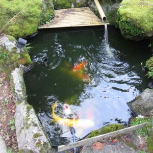 水温低下が今年は早い・・・エサ減量開始 〜池作り〜
