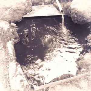 今年は季節が2週間早い 〜第1池・水温16度〜