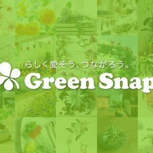 養老孟司先生から教わった「植物鑑定アプリ」 〜サタデーエッセー〜