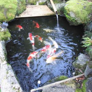 今朝の気温19度。秋を感じる朝! 〜池作り〜