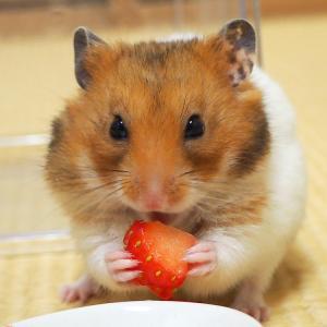 はじめてのイチゴ