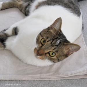 猫と眠る、枕いらずの枕カバー。