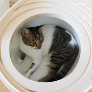 小さいと安心、上から猫トイレプチ。
