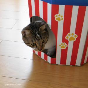 56nyan*猫用の福袋を買い始めた、きっかけ。