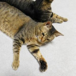 猫と暮らしながら、もしも病気になったら。