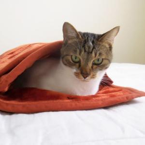 猫にとって、ふわふわ毛布とは。