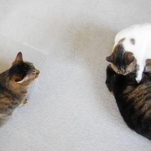 猫と静電気、その応急処置。