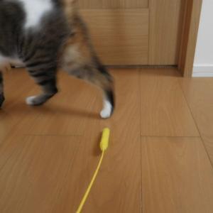 猫の便秘に注意の季節