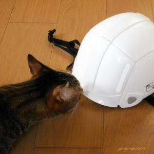 トーヨー*防災用で6年目、ヘルメットは折りたたみ。