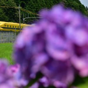 今日の幸せの黄色い新幹線
