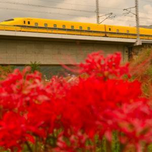 彼岸花と黄色い新幹線