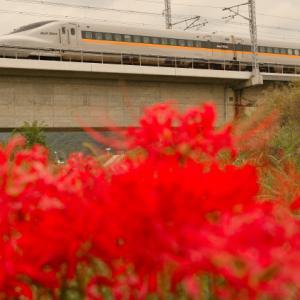 彼岸花と新幹線