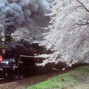 咲花駅の桜