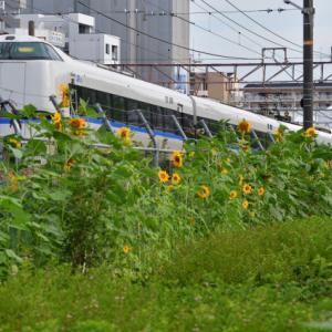 東淀川駅付近の向日葵