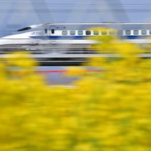 葉の花と新幹線
