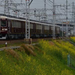 菜の花と阪急電車