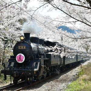 大鉄 桜ヘッドマーク