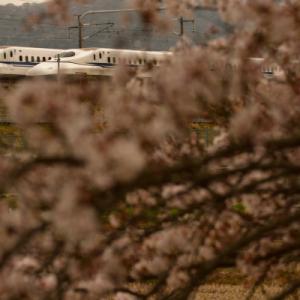 近江長岡の桜と新幹線