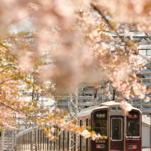 満開の桜と阪急電車