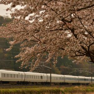 近江長岡の桜と在来線