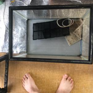 水槽リセット