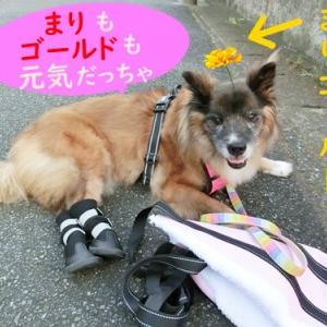 歩行を助ける今の靴(まり編)