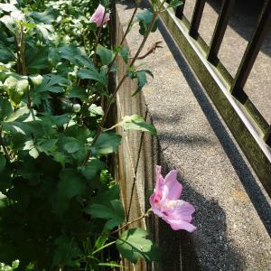 夏の庭 Part1