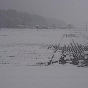 初雪が大雪
