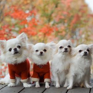 秋色お写ん歩