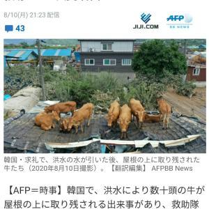 韓国のニュースの続きを日本のニュースで知る…