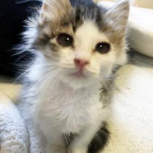12/7(土)さいたま市動物愛護ふれあいセンターにて「保護ネコ譲渡会」開催
