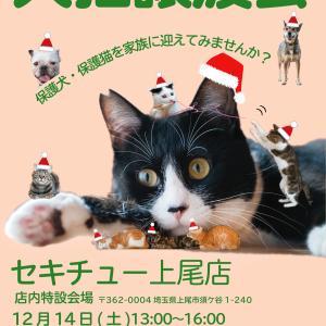 12/14(土)「セキチュー上尾店犬猫譲渡会」に参加させていただきます!