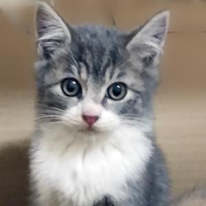 12/21(土)さいたま市動物愛護ふれあいセンターにて「保護ネコ譲渡会」開催