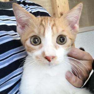 2/8(土)さいたま市動物愛護ふれあいセンターにて「保護ネコ譲渡会」開催