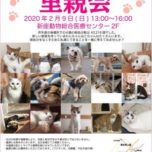 2/9(日)新座動物総合医療センター犬猫里親会に参加します