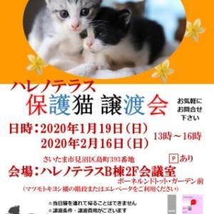 2/16(日)ハレノテラス保護猫譲渡会に参加します