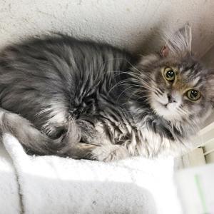 2/29(土)さいたま市動物愛護ふれあいセンターにて「保護ネコ譲渡会」開催