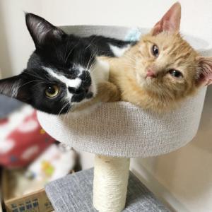 6/14(日)13時30分~さいたま市 新都心東広場「保護猫・保護犬譲渡会」開催