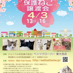 4/3(土)13時~ペッツクローバー東大宮店「保護ネコ譲渡会」開催!